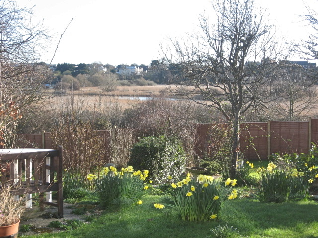 Garden in March